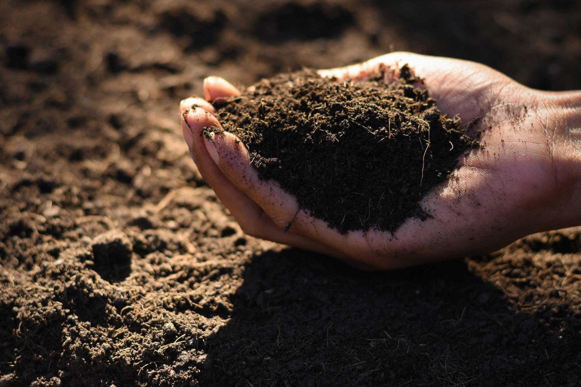 The hands of the agricultural men are picking the best soil for planting.